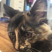 Adopt A Pet :: Dos - Toronto, ON