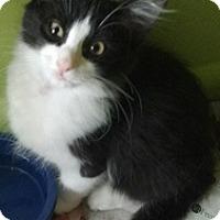 Adopt A Pet :: Rocky - Atlanta, GA