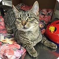 Adopt A Pet :: Millie - Sherwood, OR
