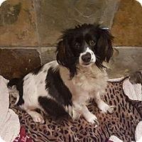 Adopt A Pet :: Petunia - Long Beach, CA
