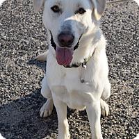 Adopt A Pet :: Nero - Bay Shore, NY
