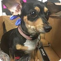 Adopt A Pet :: Daisy - Lincolnton, NC