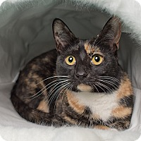 Adopt A Pet :: Francesa - Wilmington, DE