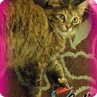 Adopt A Pet :: Cali - Anaheim Hills, CA