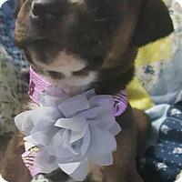 Adopt A Pet :: Tessa - Boston, MA