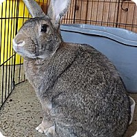 Adopt A Pet :: Dempsey - Foster, RI