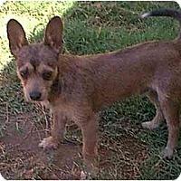 Adopt A Pet :: Gabriel - dewey, AZ