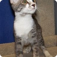 Adopt A Pet :: K-Hart9-Darwina - Colorado Springs, CO