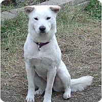 Adopt A Pet :: Mei Mei - Southern California, CA