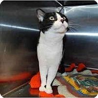 Adopt A Pet :: Pepper - Modesto, CA