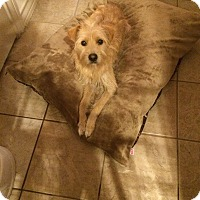 Adopt A Pet :: London - San Antonio, TX