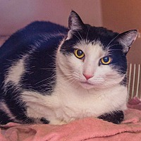 Adopt A Pet :: Eileen - Middletown, CT