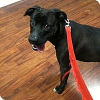 Adopt A Pet :: TUX - Louisville, KY