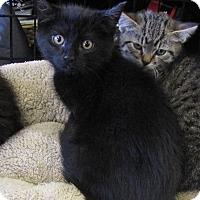 Adopt A Pet :: Murdock - bloomfield, NJ