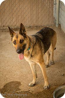 German Shepherd Dog Mix Dog for adoption in Phoenix, Arizona - Maddie
