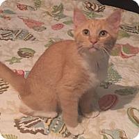 Adopt A Pet :: Sunny - Port Charlotte, FL