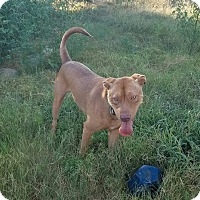 Adopt A Pet :: Buddy - Greenville, NC