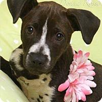 Adopt A Pet :: Autumn - Effort, PA