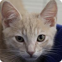 Adopt A Pet :: Paploo - Sarasota, FL