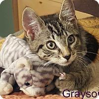 Adopt A Pet :: Grayson - Wantagh, NY