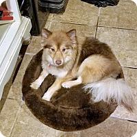 Adopt A Pet :: Kitkat - conroe, TX