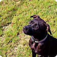 Adopt A Pet :: Helena - Barco, NC