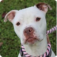 Adopt A Pet :: MEREDITH - Red Bluff, CA