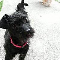 Adopt A Pet :: Almira Gulch - Houston, TX