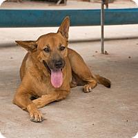 Adopt A Pet :: Mia - Long Beach, NY