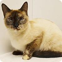 Adopt A Pet :: *PENNY - Sacramento, CA
