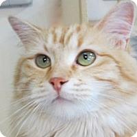 Adopt A Pet :: BOUCHE - Hamilton, NJ
