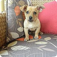 Adopt A Pet :: Corky - Mission Viejo, CA