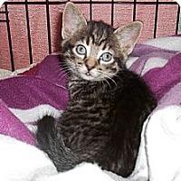 Adopt A Pet :: Bitzy - Acme, PA
