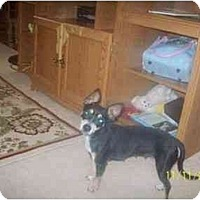 Adopt A Pet :: Abby - Albany, NY