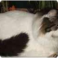 Adopt A Pet :: Norman - Davis, CA