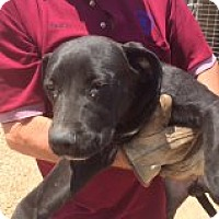 Adopt A Pet :: Marty - Childress, TX