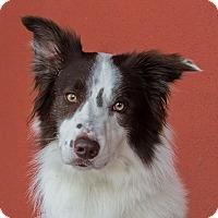 Adopt A Pet :: Harrison - Garland, TX
