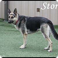 Adopt A Pet :: Stormy - Rockwall, TX