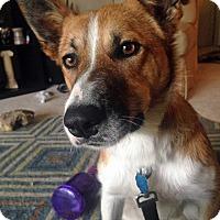 Adopt A Pet :: Ezra - Midwest (WI, IL, MN), WI
