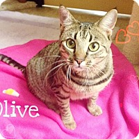 Adopt A Pet :: Olive - Foothill Ranch, CA