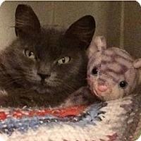 Adopt A Pet :: Pookie - Novato, CA