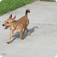 Adopt A Pet :: Buttercup - Weeki Wachee, FL