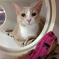 Adopt A Pet :: Copper - Baton Rouge, LA
