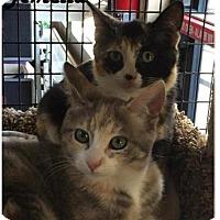 Adopt A Pet :: Avery and Amelia - Redwood City, CA