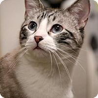Adopt A Pet :: Jasper - Dallas, TX