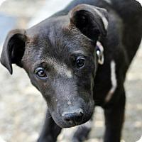 Adopt A Pet :: Lindy - Pleasant Plain, OH