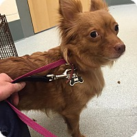 Adopt A Pet :: Mia - Worcester, MA