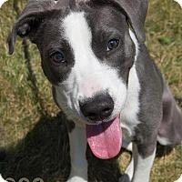 Adopt A Pet :: Emma - Wauwatosa, WI