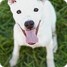 Adopt A Pet :: Freckles