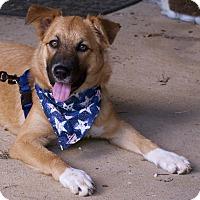 Chow Chow/Border Collie Mix Dog for adoption in Staunton, Virginia - little bit